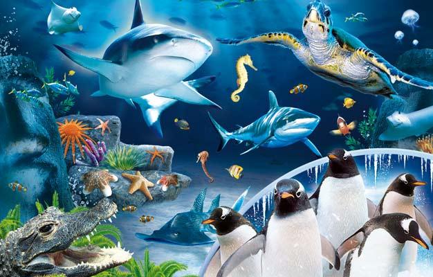 Optimus 5 Search Image Sea Life Aquarium