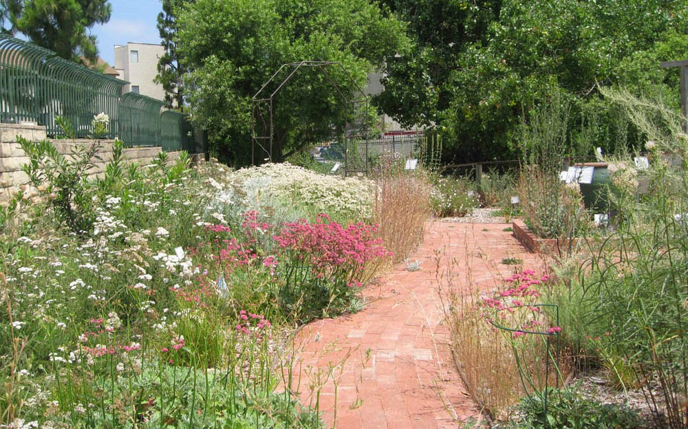 Mother Nature'S Backyard - A Water-Wise Garden: Designing Your New