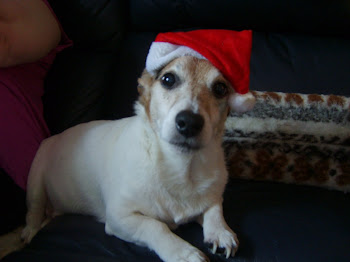 Yogi in his Christmas Hat