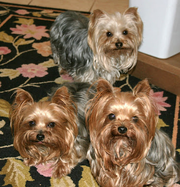 Max, Miki & Harlee