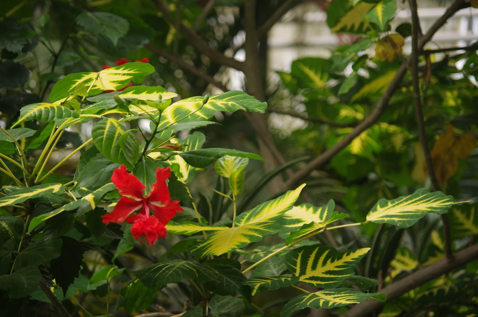 Le jardin des couronnes la serre exotique du jardin for Jardin olbius riquier