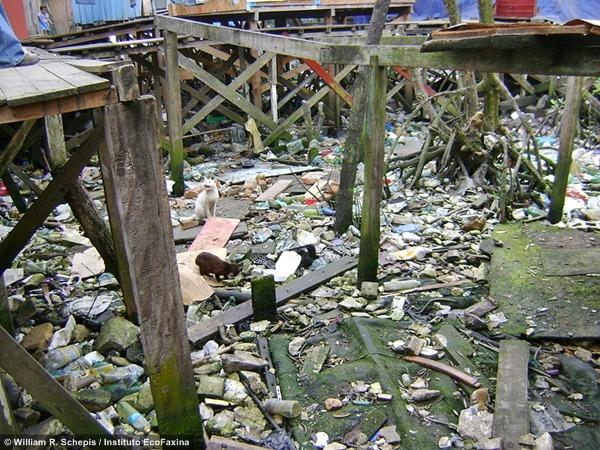 Uma enorme quantidade de resíduos sólidos se acumulam entre as raízes das árvores de mangue e embaixo das palafitas. Crédito: Instituto EcoFaxina