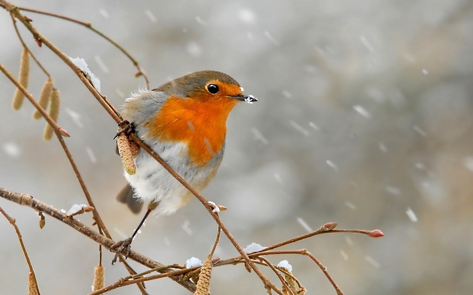 Le fragranze del mese di dicembre icicles e season of for Immagini desktop inverno