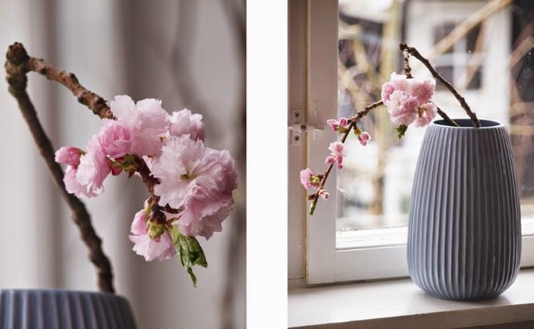 Japanske kirsebærtræ med feminine, lyserøde blomster