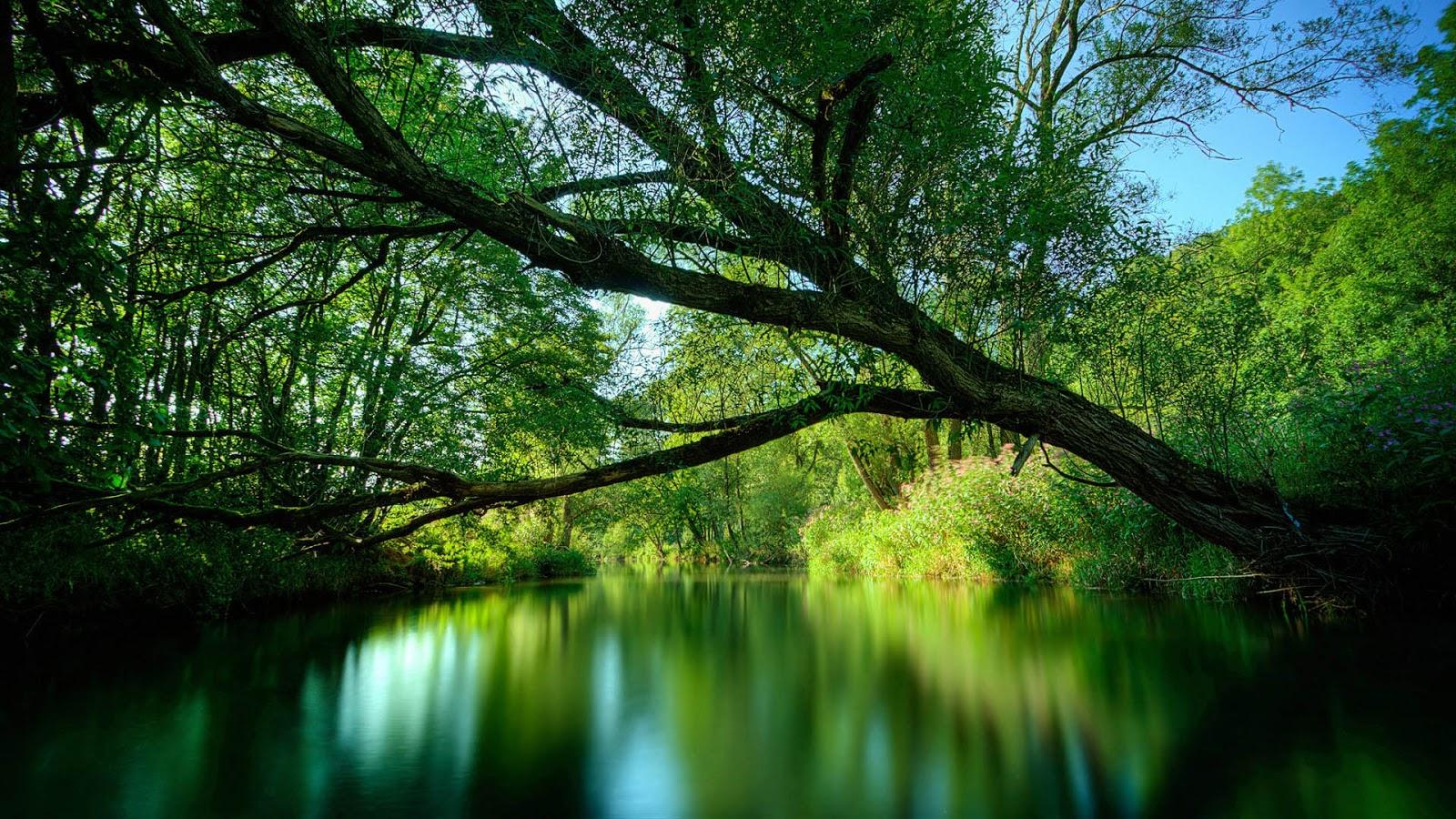Wallpaper hd river flows in you noten - c1f0
