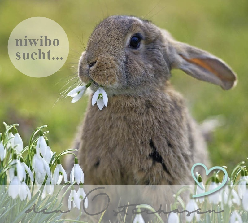 niwibo sucht... im März