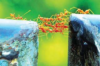 """معجزة طولها 2 مللم """"النمل"""" ويكفي انه سميت احدى سور القران بأسم هذا الكائن!"""