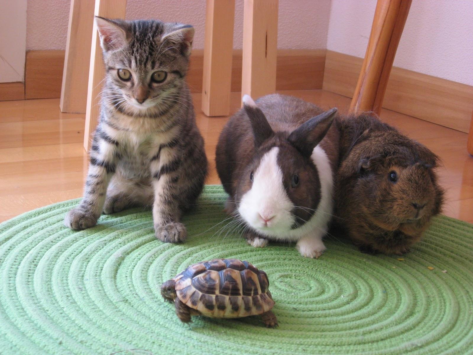 Nos petits freres les animaux lapin et tortue photos - Photo de lapin mignon ...