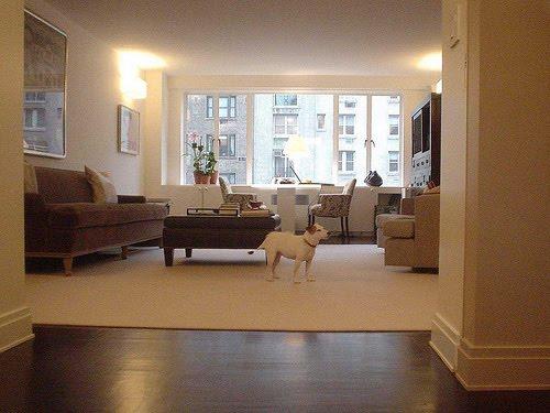 Cães em apartamentos