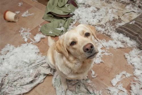 dinfo.gr - 30 ένοχα σκυλιά που ξέρουν ακριβώς γιατί τα μαλώνεις!