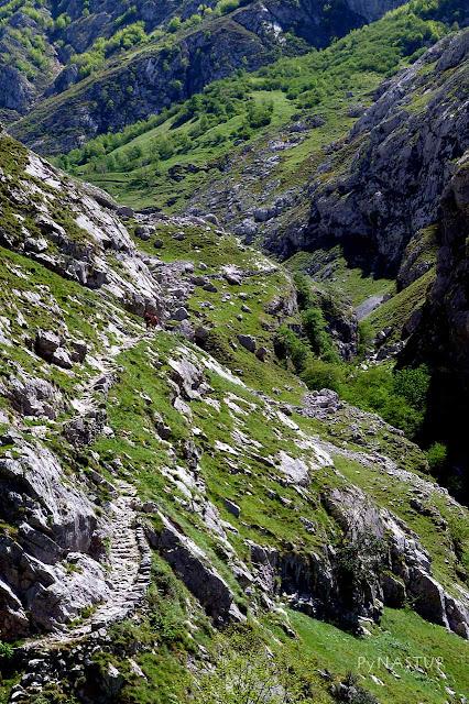 Desfiladero del Tejo - Asturias