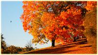 Fall wallpaper | HD Wallpaper – High Definition Wallpapers