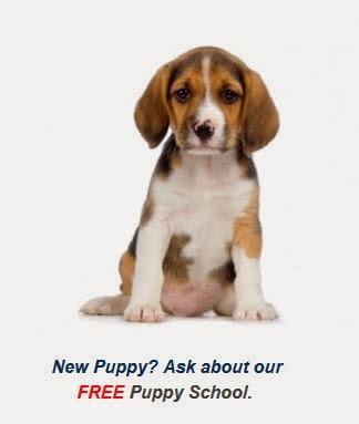 McDowall Free Puppy Training