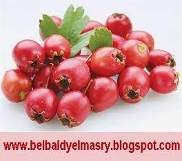 تعرف على فوائد نبات الزعرور واهميته فى تقوية القلب وتوسيع الاوعيه الدمويه