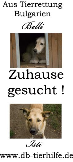 ZUHAUSE GESUCHT fr Belli und Isti