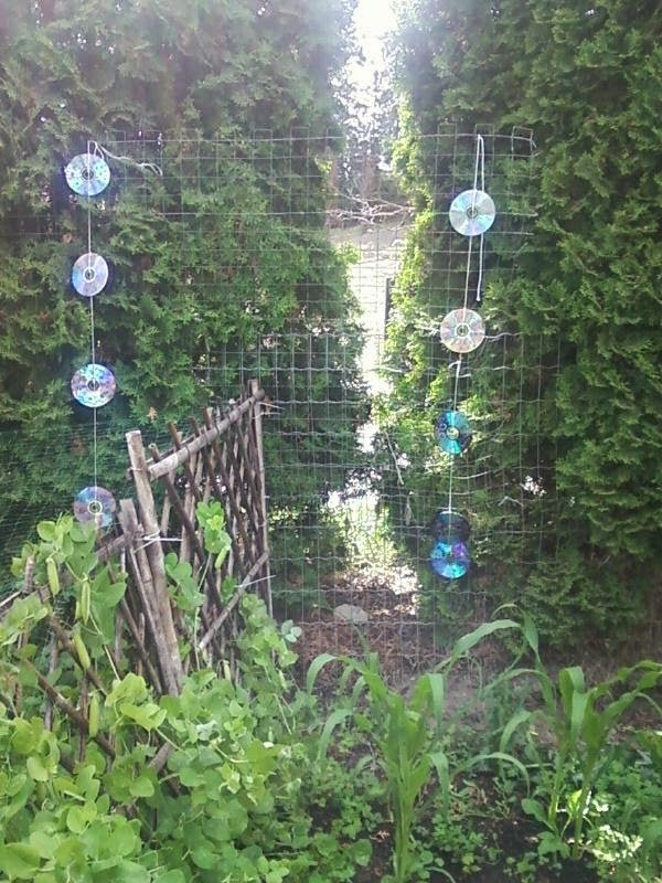Keep Birds Out Of Your Garden! DIY Bird Deterrent!