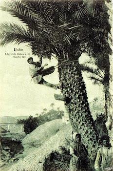 Elche 1910
