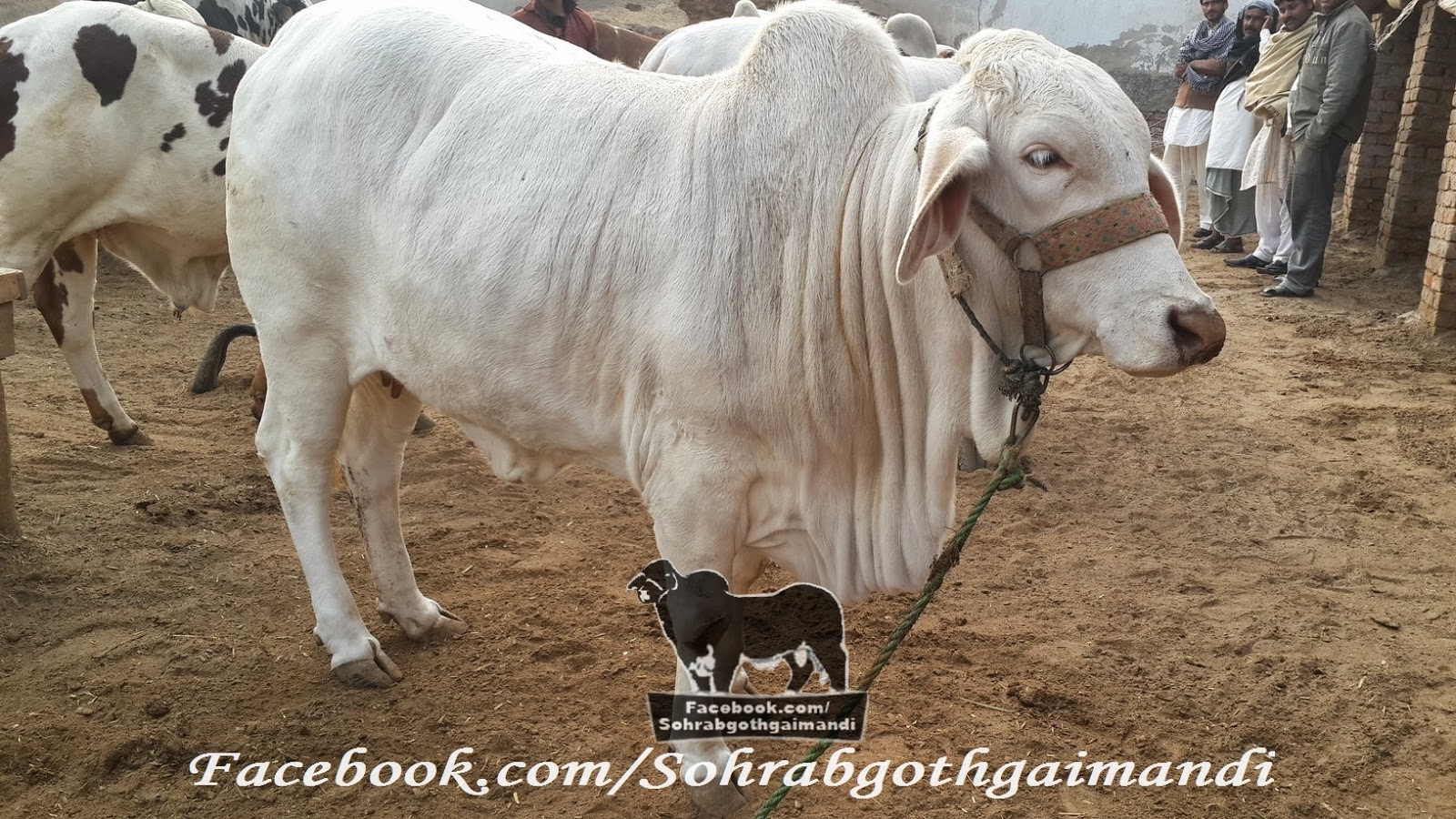 Rahman Cattle Farm Photos 2014