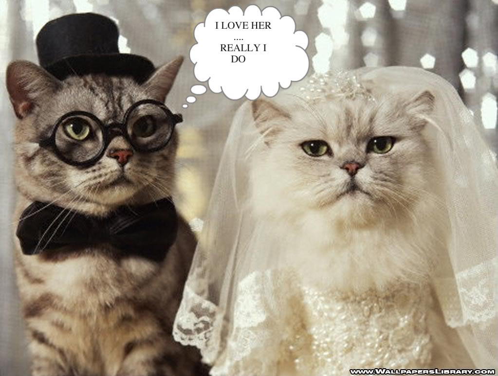 видео приколы смешные кошки и коты