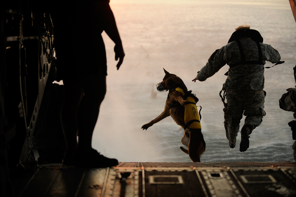 This Picture, From Manual J. Martinez, Of The USAF, Shows A Jump From A  Chinook CH 47, In A Training Exercise Over The Gulf Of Mexico. This Dog Is  Wearing A ...