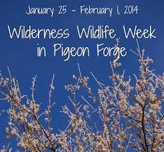 Wilderness Wildlife Week in Pigeon Forge, TN