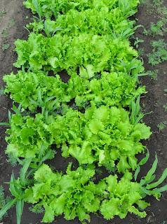 9 июня, салат готов к употреблению