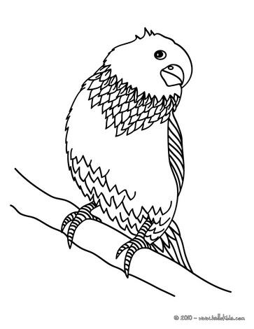 Desenhos de periquitos para colorir - Coloriage perruche ...