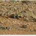 Criatura en Marte encontrada en una foto tomada por la NASA Rover Curiosity, mayo de 2013.