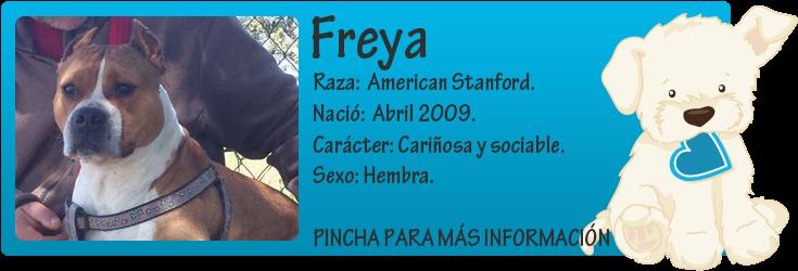 http://mirada-animal-toledo.blogspot.com.es/2013/04/freya-american-stanford-en-adopcion.html