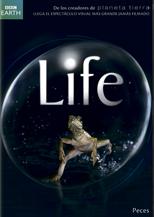 Peces - Life