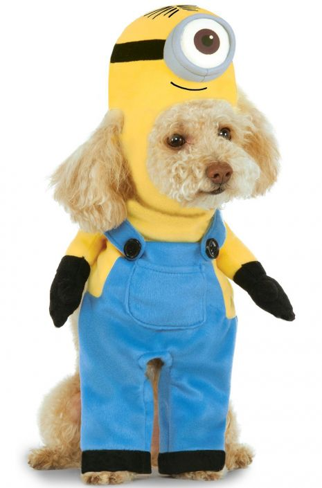 Don't forget the Pet Costumes! This one cracks me up!