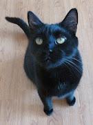 Black Cat Confessions