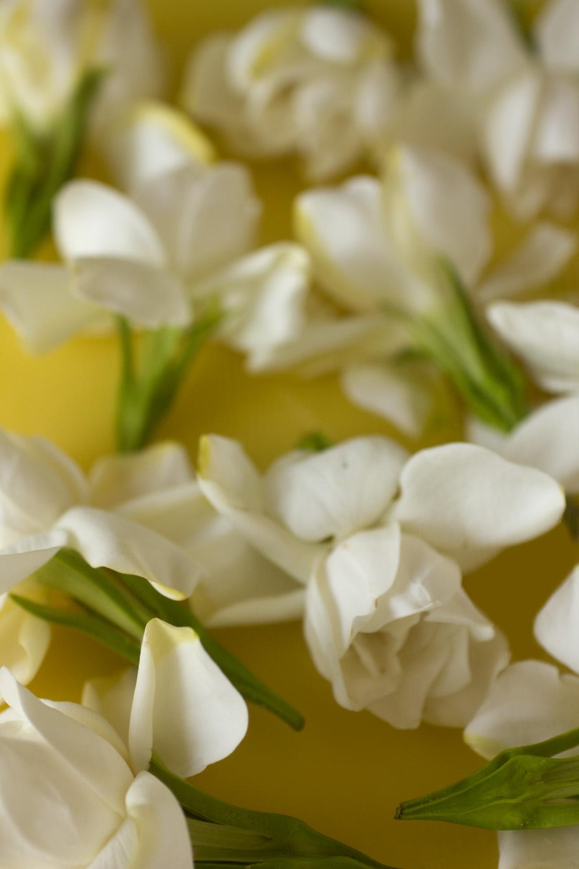 Roxana Illuminated Perfume White Flower Season