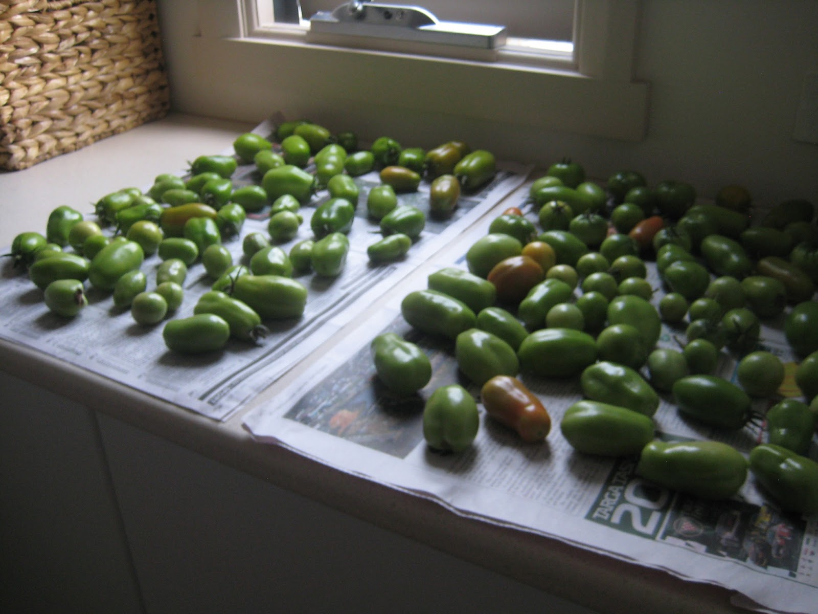 fruit ripening experiment