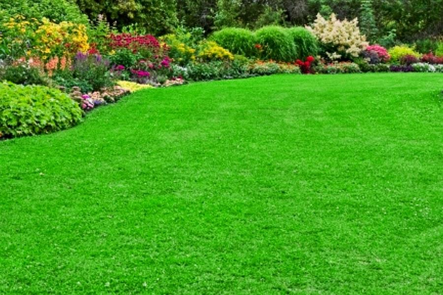 Aforismario giardino prato e campagna frasi e citazioni - Quando seminare erba giardino ...
