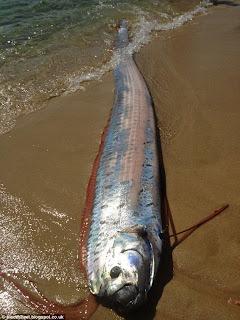 Ikan Aneh Ditemukan Di Meksiko