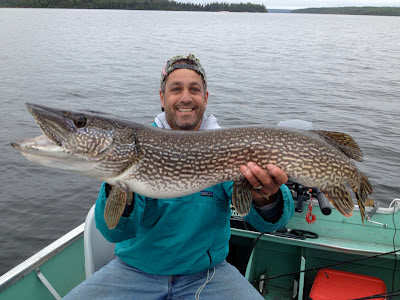 Trophy Northern Pike caught & released at Rainbow Point Lodge, Perrault Lake