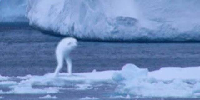 raksasa di antartika
