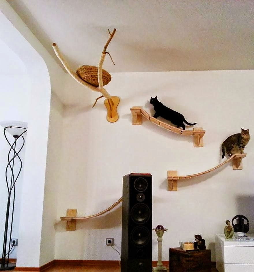 Todo sobre mi gato enriquecimiento ambiental felino - Estantes para juguetes ...
