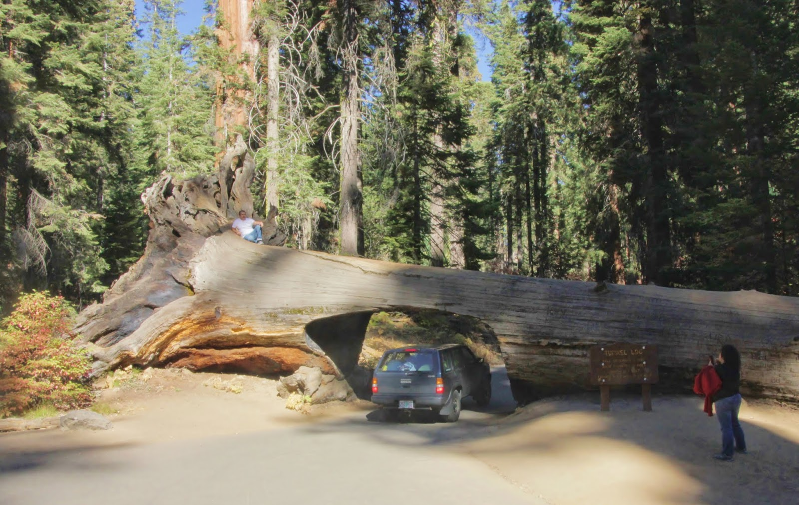Tunnel Tree, Sequoia National Park