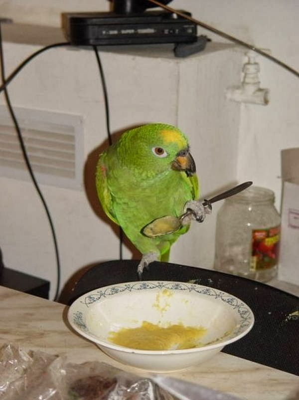 Funny animals of the week - 28 February 2014 (40 pics), bird eats using spoon