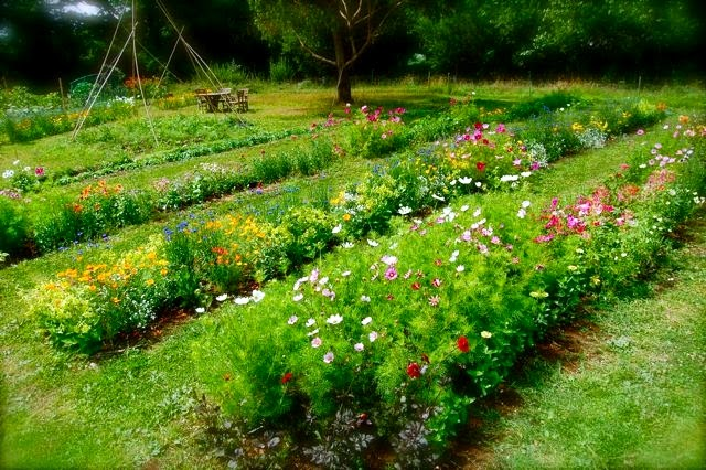 Row Flower Garden : Two men and a little farm cutting garden rows