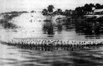 foto anaconda abuna ular terbesar