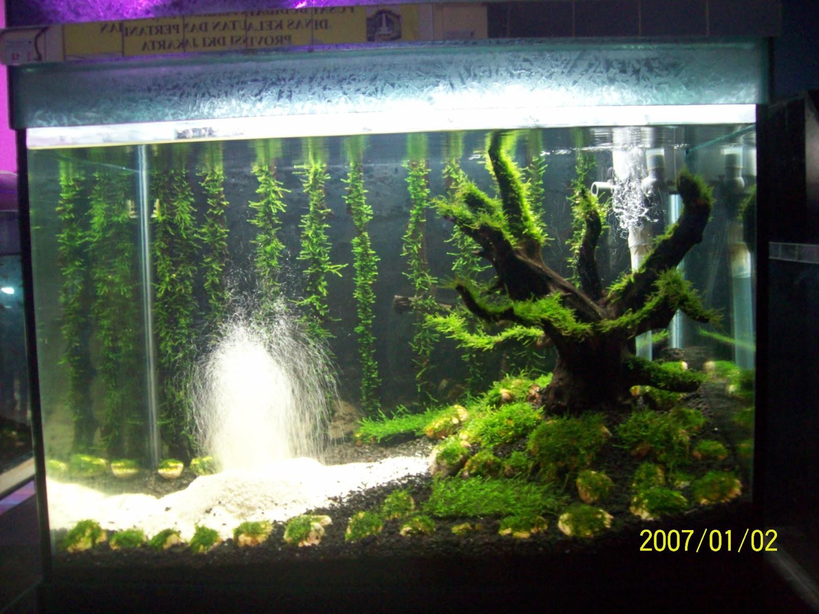 Wangsa s 39 mitha interior desain aquascape - Gambar aquascape ...