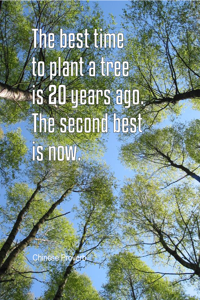 visual quote - image quotation for PROCRASTINATION - The best time to plant a tree is 20 years ago. The second best is now. - Chinese proverb