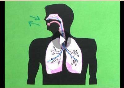 http://educacion.practicopedia.com/como-funciona-el-aparato-respiratorio-2322