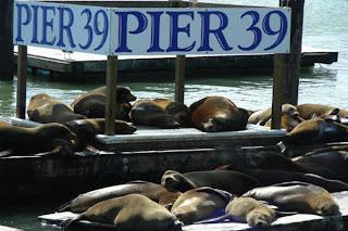 sealions-of-pier39