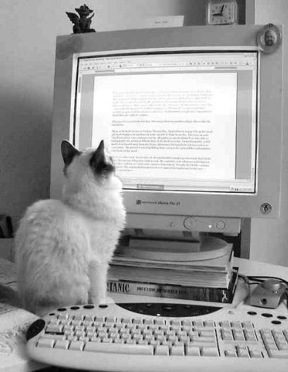 Cat reading a computer screen