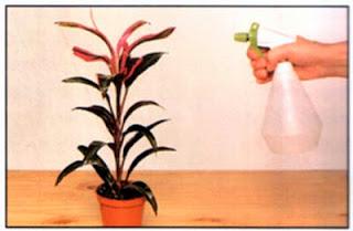 Опрыскивание лиственных растений