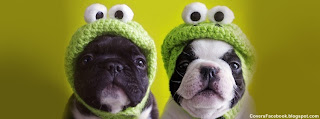 Dogs in Hats Facebook Cover Timeline